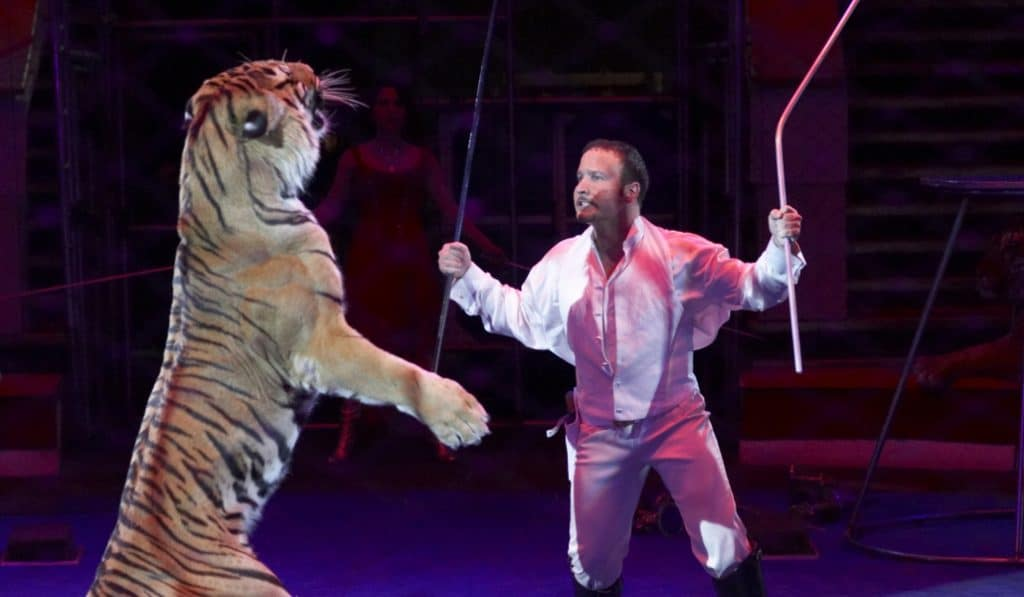 El circo con animales vuelve a Madrid