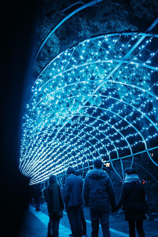 luces-navidad-jardin-botanico-madrid