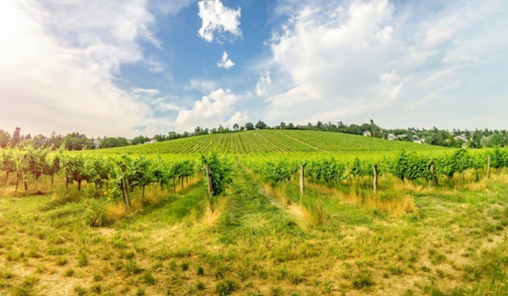El turismo de bodegas de vinos está aquí (y ha llegado para quedarse)