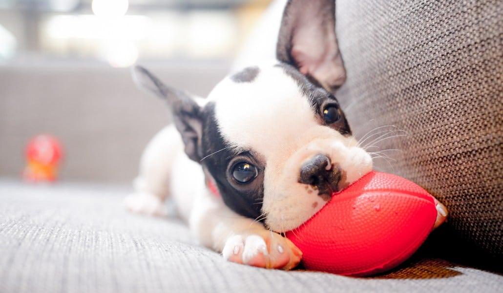 En Madrid Se Adoptaron Casi 6 000 Perros Y Gatos El Año Pasado Madrid Secreto
