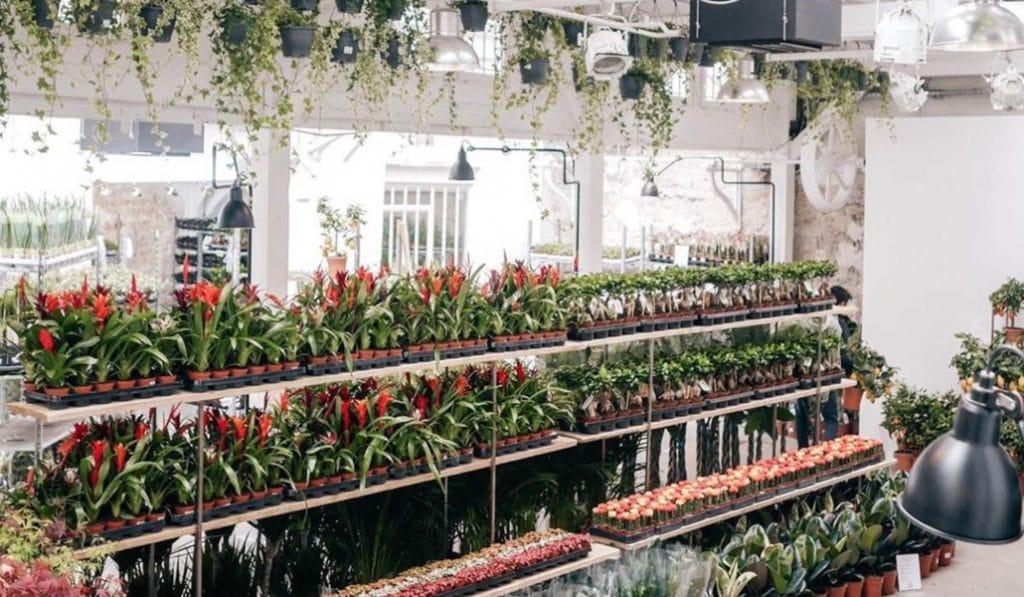 Malasaña tendrá un mercado efímero de plantas este fin de semana