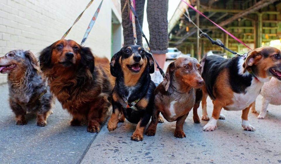 El Museo ABC de Madrid abrirá la entrada a los perros a partir de ahora