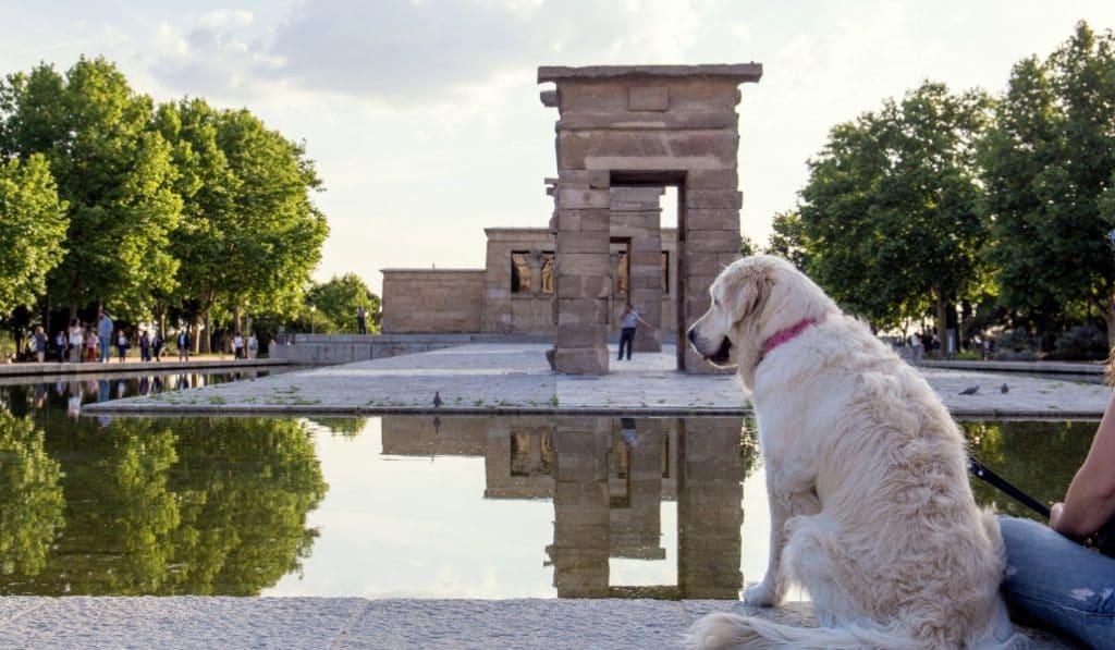 Madrid, entre los destinos más «dog-friendly» de Europa