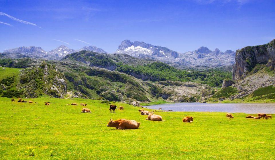 De Madrid a Asturias en menos de tres horas: así será el viaje en tren a Oviedo