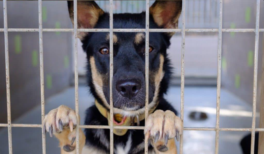 Los perros de la perrera saldrán a pasear con voluntarios madrileños