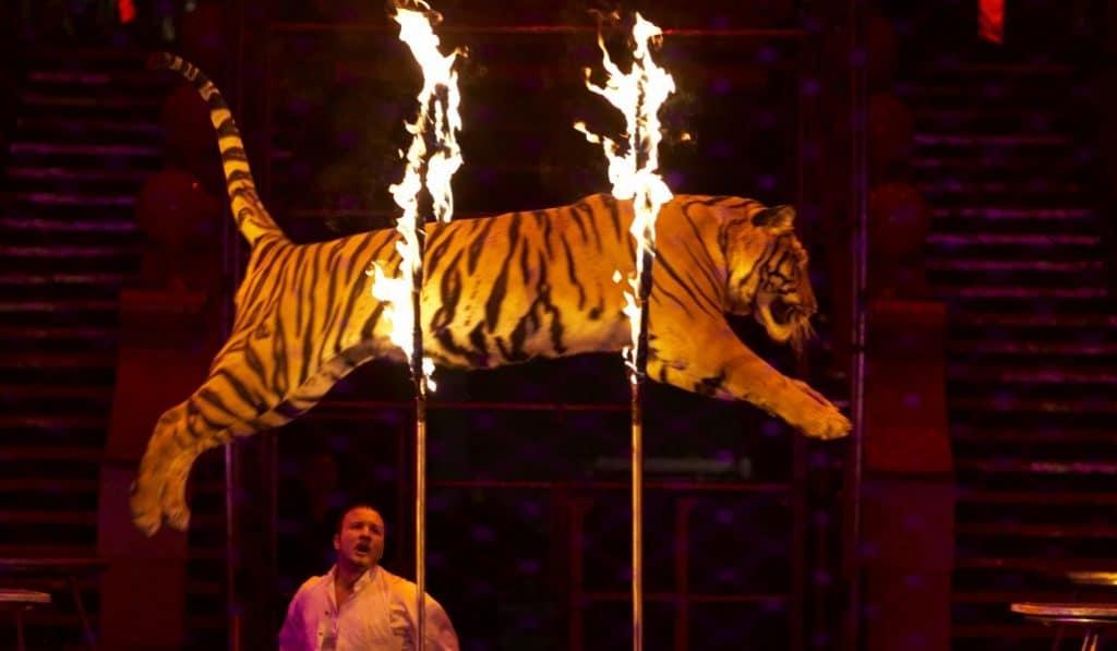 Los circos con animales ya no están prohibidos en San Sebastián de los Reyes