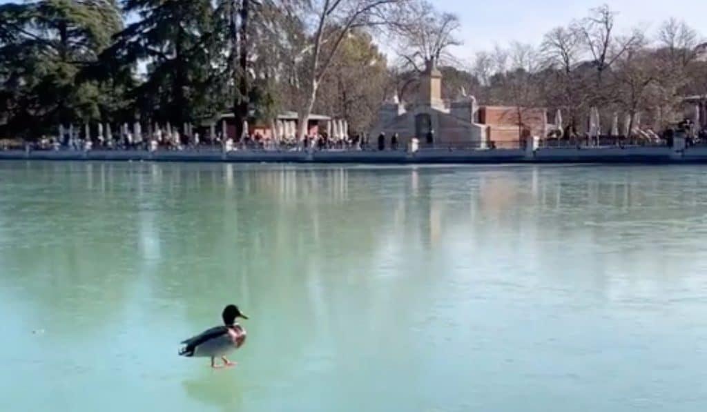 Los patos del Retiro anduvieron ayer sobre el estanque congelado