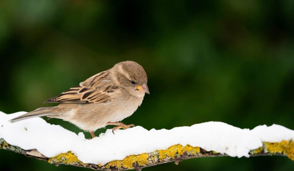 Las aves urbanas de Madrid están en riesgo extremo por culpa de Filomena