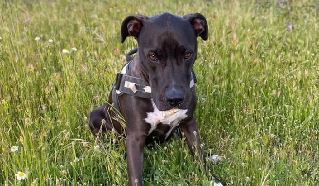 Aparece Brutus, el perro que huyó asustado tras la explosión del miércoles