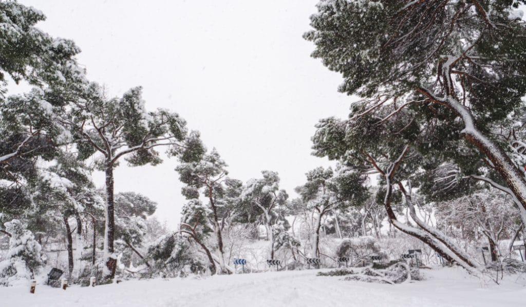 Los árboles de la Casa de Campo que tiró «Filomena» serán triturados y utilizados como abono