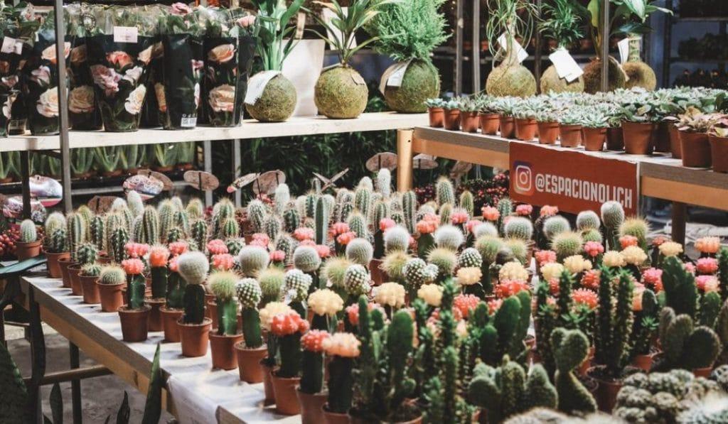 Un jardín efímero abrirá en la Latina durante solo un finde