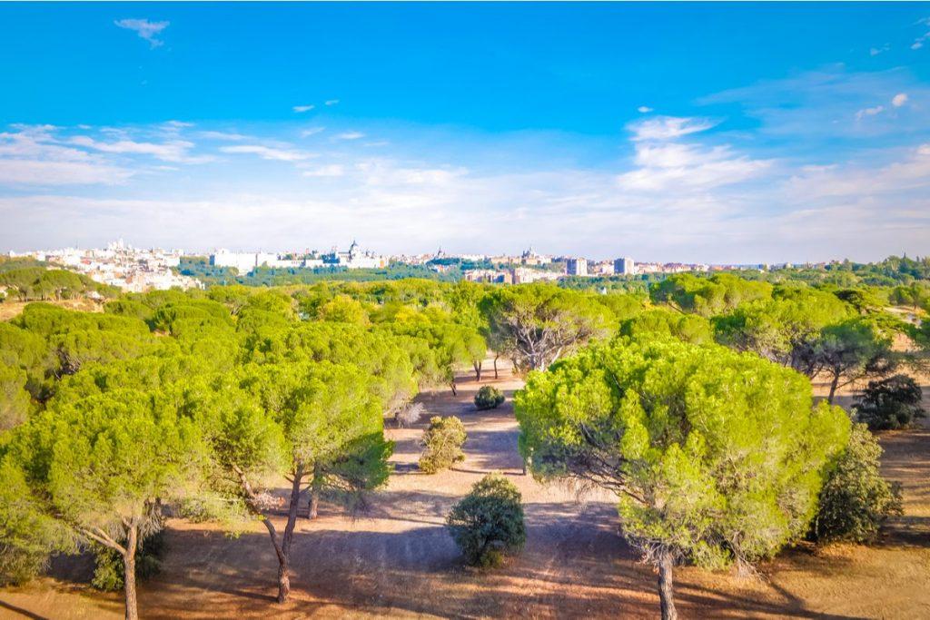 Madrid reconocida como ciudad arbórea del mundo por segundo año consecutivo
