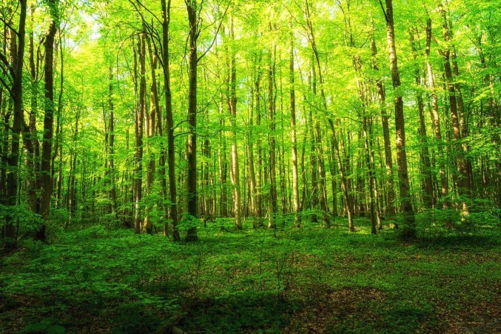 Madrid tendrá un bosque en homenaje a los fallecidos durante la pandemia