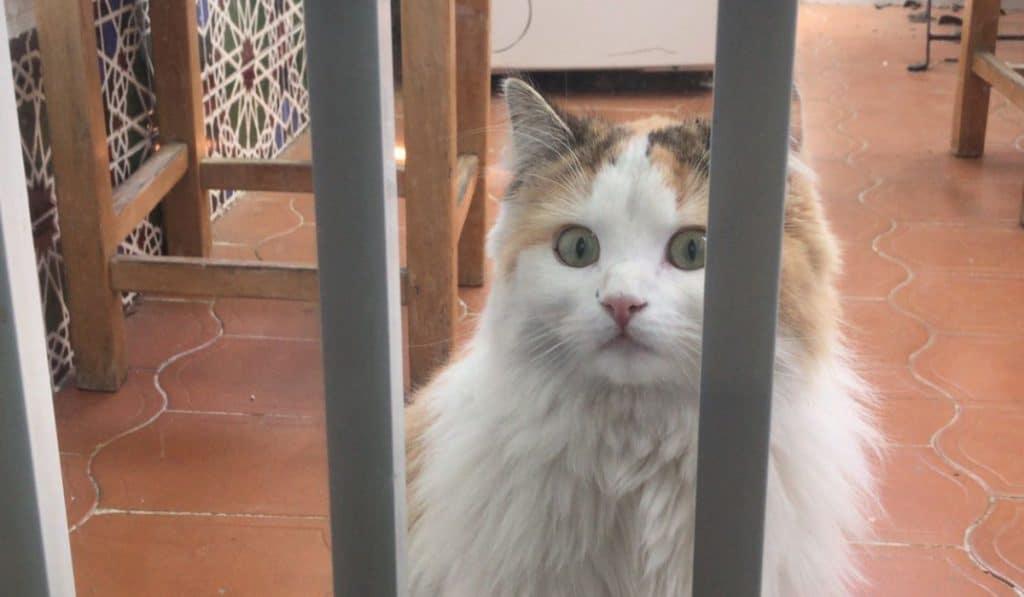 Una gata sobre el tejado (de uralita)