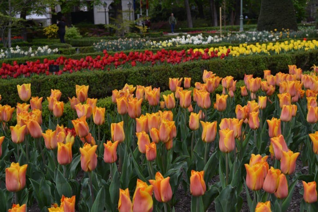 El Real Jardín Botánico se llena de tulipanes