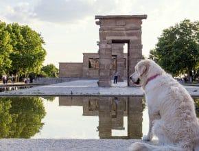 ¿Te pueden multar si no limpias la orina de tu perro en Madrid?