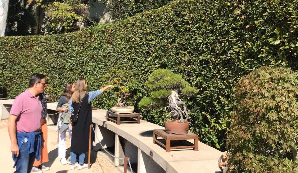 El Jardín Botánico tiene más de 100 bonsáis donados por un expresidente del Gobierno