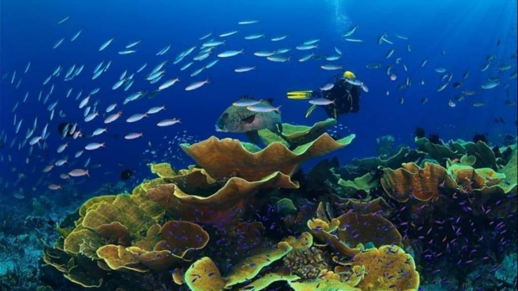 Mer : La vie sous-marine marseillaise aidée par le confinement !