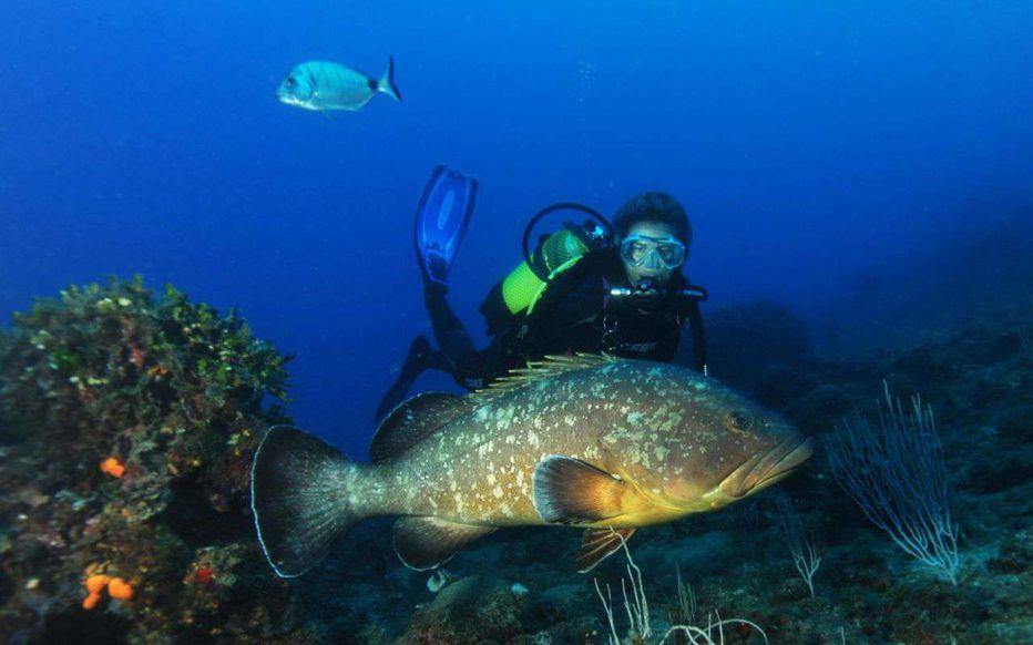 poissons marseille mérou vie sous marine confinement