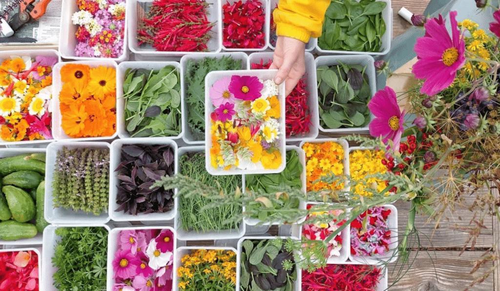 Avec Bigoud' le concept des Fleurs Comestibles débarque à Marseille !
