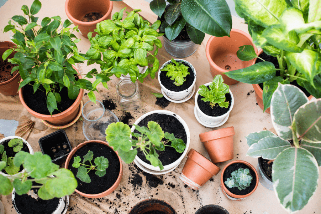 Grand Troc de Plantes ce Dimanche aux Ateliers Blancarde !