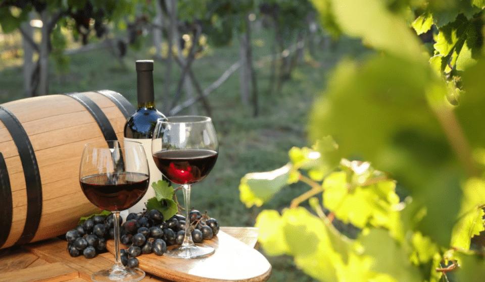 Alerte Job de Rêve : Gagnez 8500€ par mois pour tester du Vin & vivre dans un Vignoble !