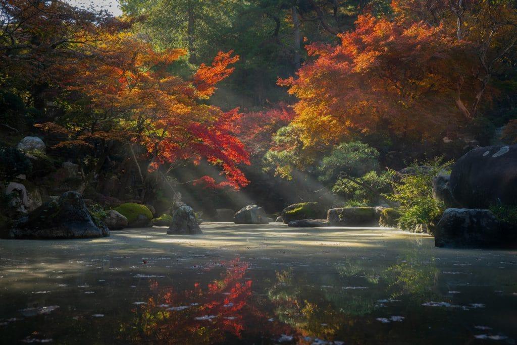 jardin japonais marseille nature