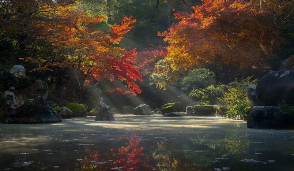Nature : Bientôt un jardin japonais au sein du Parc Longchamp à Marseille !