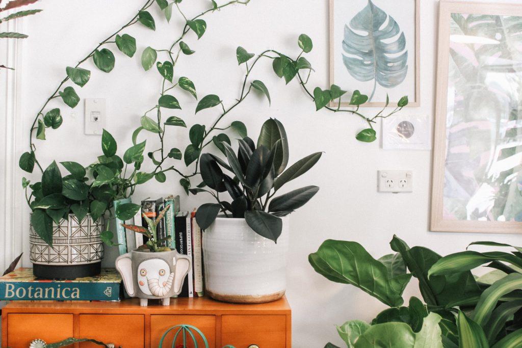plantes vente marseille plantes pour tous braderie nature