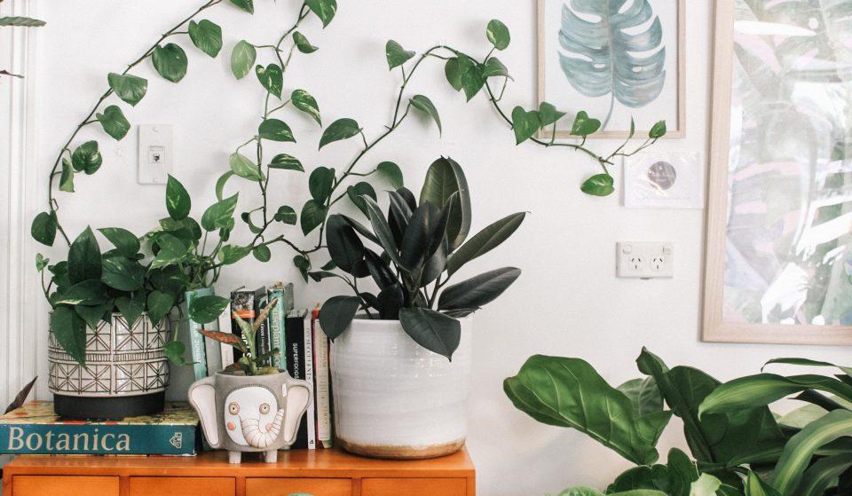 Nature : Plantes Pour Tous organise une méga vente de plantes à prix cassés pour la rentrée à Marseille !