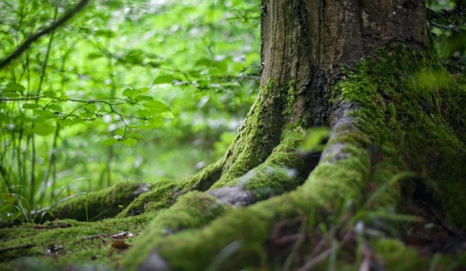 Cette incroyable carte interactive vous permet d'écouter les sons des forêts à travers le monde !