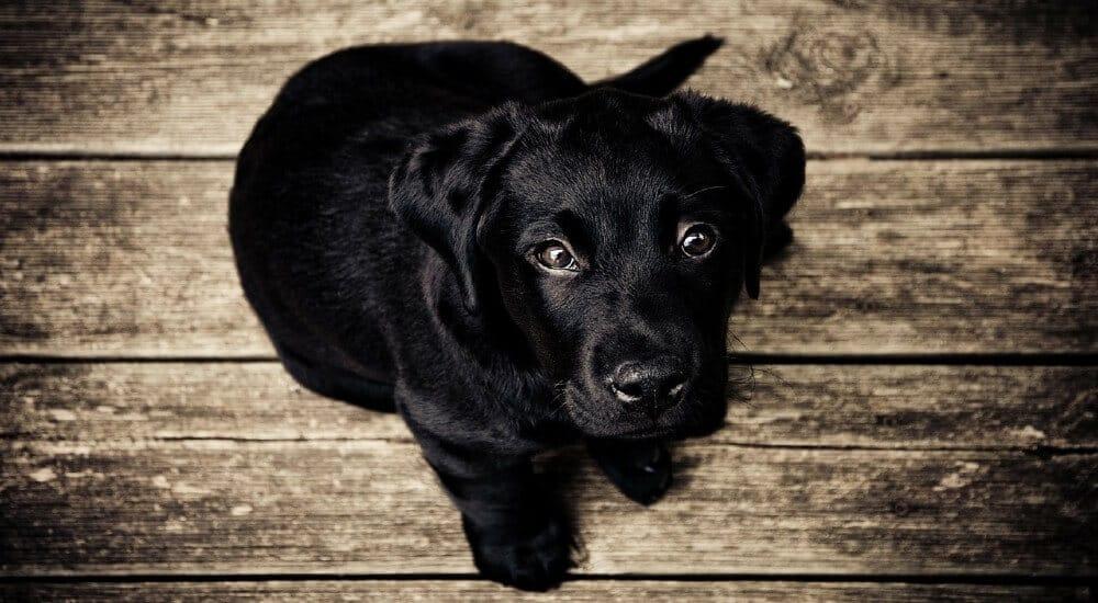 cane milano