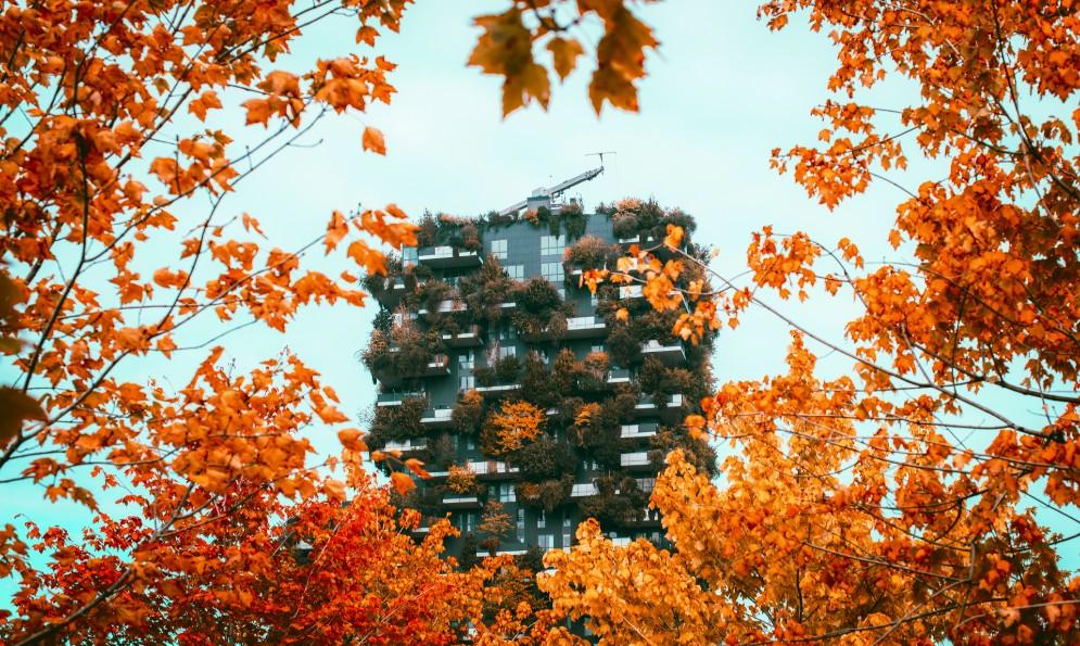 foliage autunno