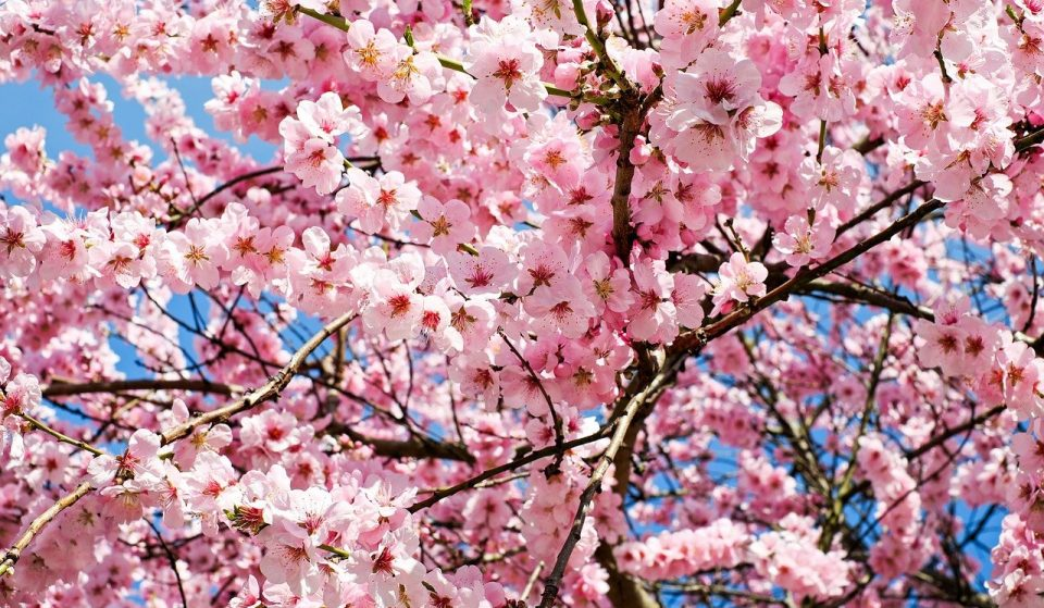 Milano avrà il suo giardino giapponese, un teatro a cielo aperto