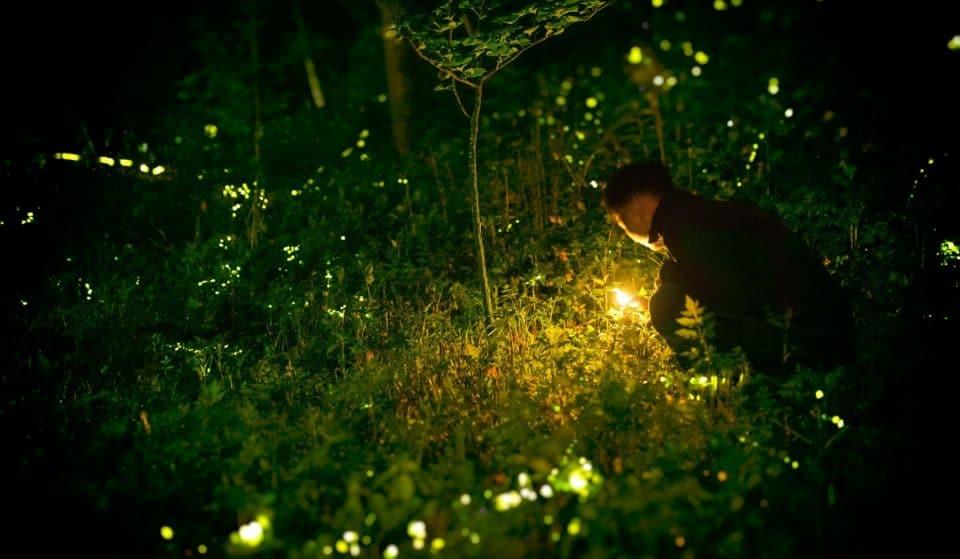 Nel bosco di Vanzago potrai ammirare le lucciole in amore