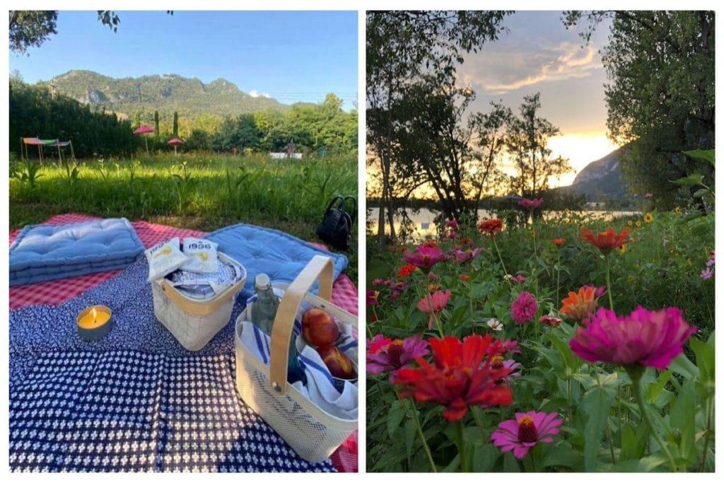 picnic campo girasoli