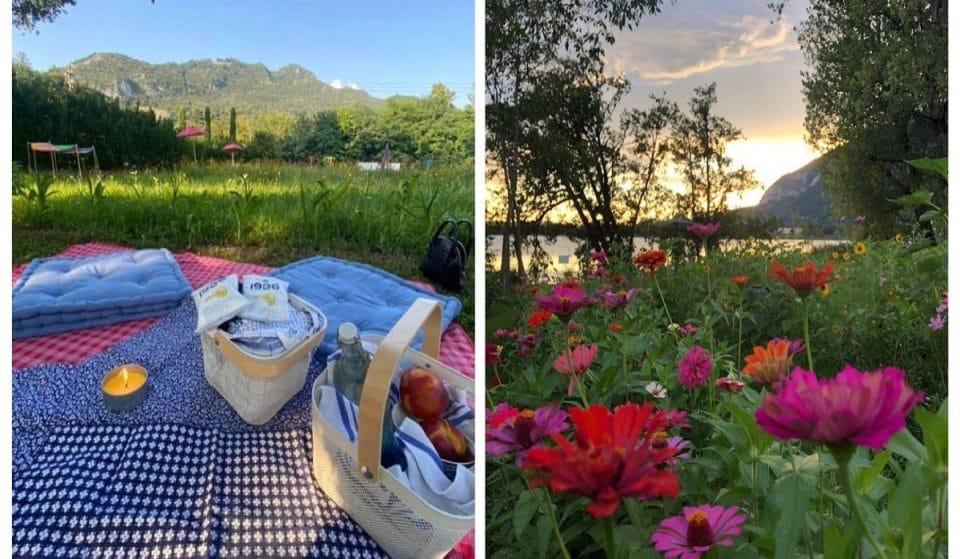 A un'ora da Milano puoi fare un picnic tra girasoli e fiordalisi