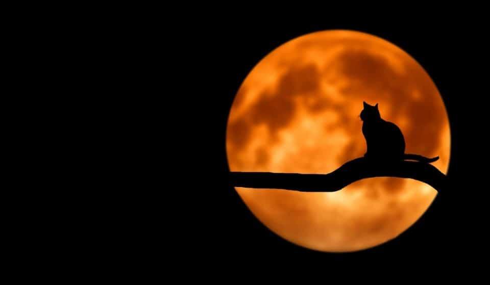 Nel cielo di ottobre splenderà la magica Luna del Cacciatore