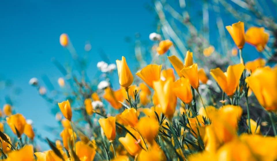 MétéoMédia annonce un printemps doux et un été chaud !