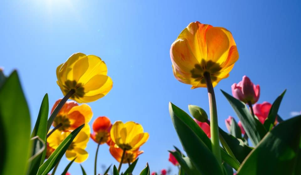 L'heure d'été : vous perdrez une heure de sommeil dans la nuit du 13 au 14 mars