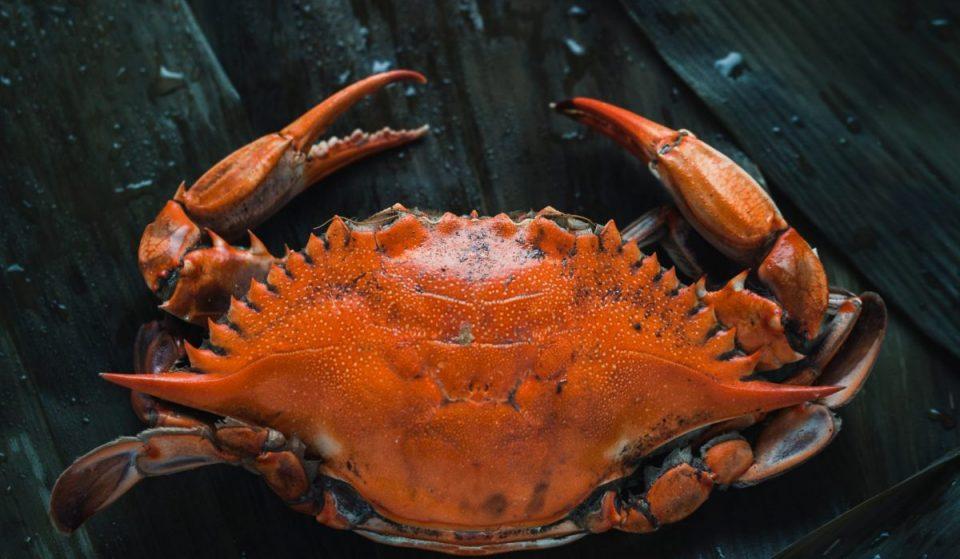 Parasol annonce le retour de son «shack du homard» caché dans une ruelle de Montréal