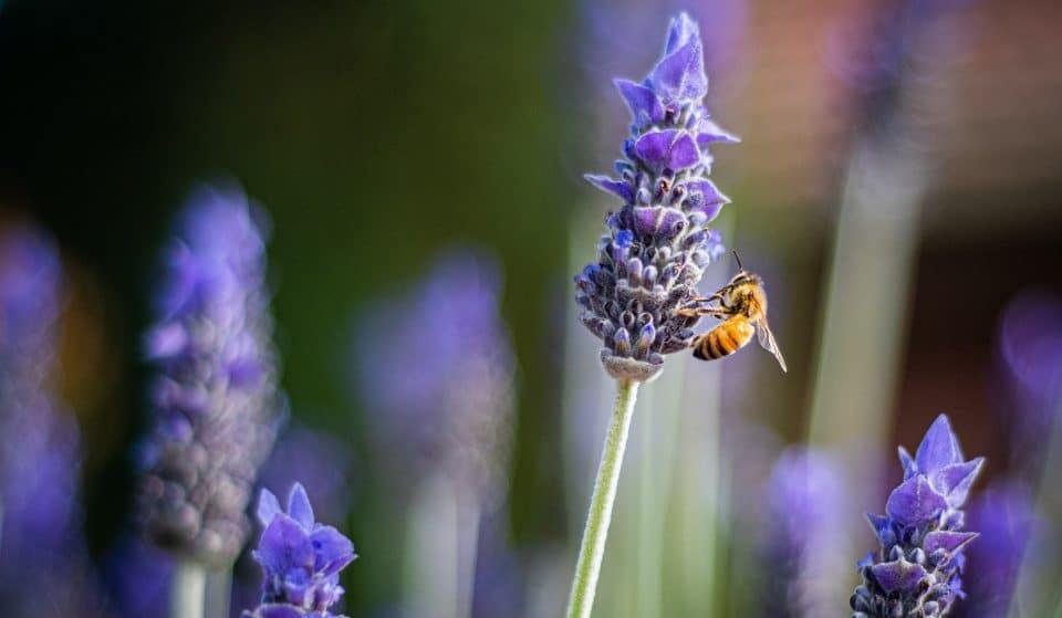 Voici nos astuces pour bien accueillir les abeilles sur votre balcon cet été