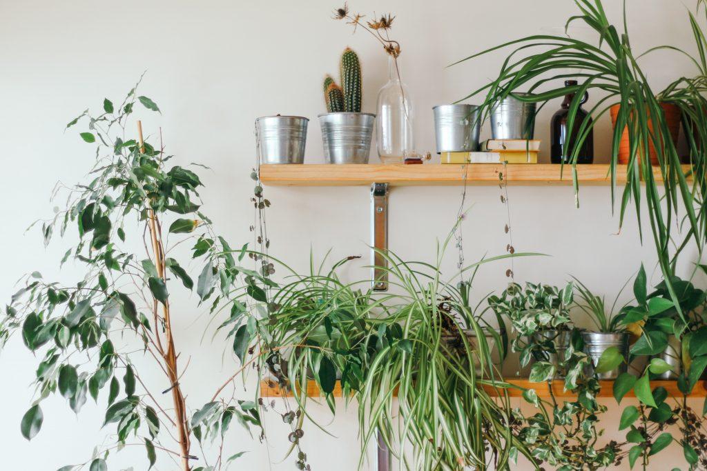 Ne manquez pas cette distribution gratuite de plantes à Montréal !