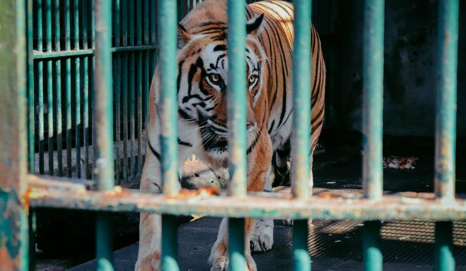 La série Tiger King revient pour une deuxième saison encore plus folle!