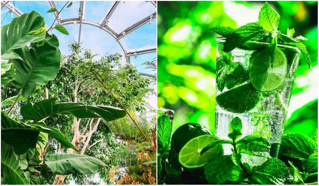 Naturya : la nouvelle bulle verte éphémère bientôt au coeur de Nice !