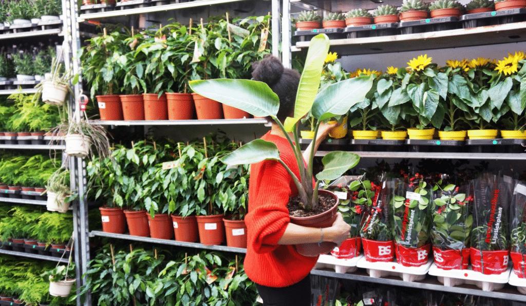 Grande vente de plantes à 2€ ce weekend à Nice!