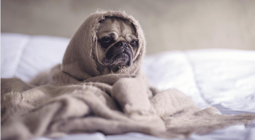 Pourquoi le confinement perturbe notre sommeil et comment y remédier ?
