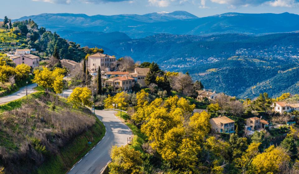 Partez sur la Route du Mimosa : Un parcours nature qui sent bon le printemps !