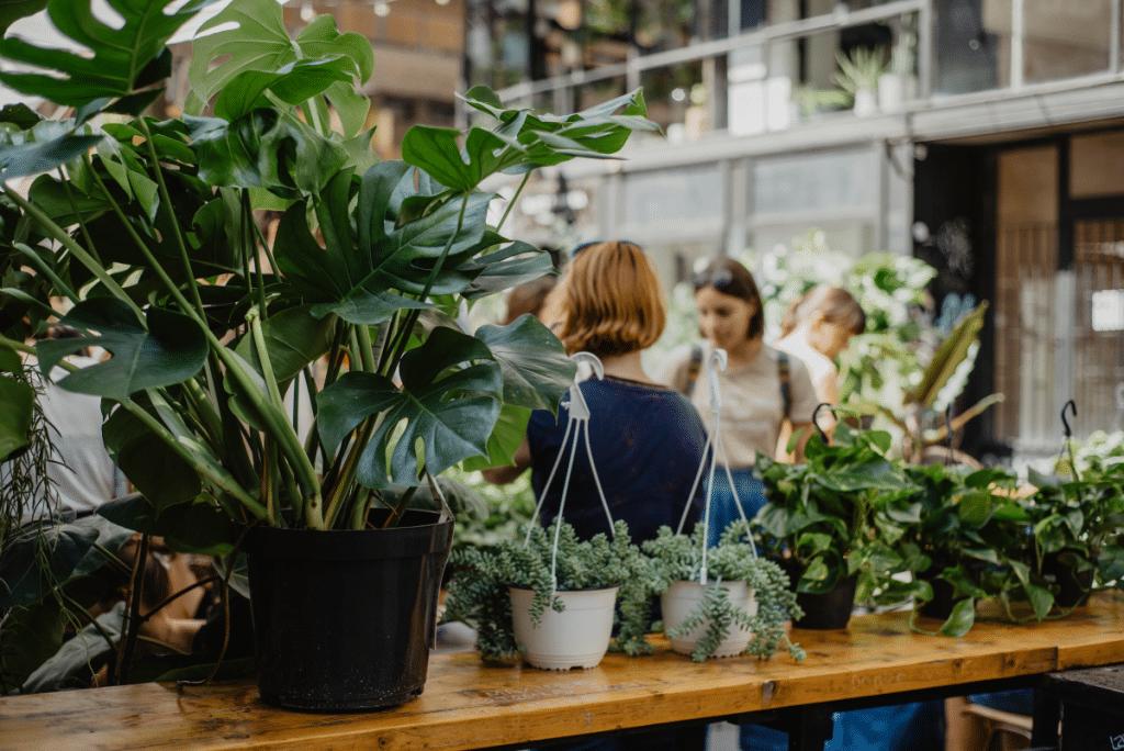 Grande Vente de Plantes à partir de 2€ ce Weekend à Nice !