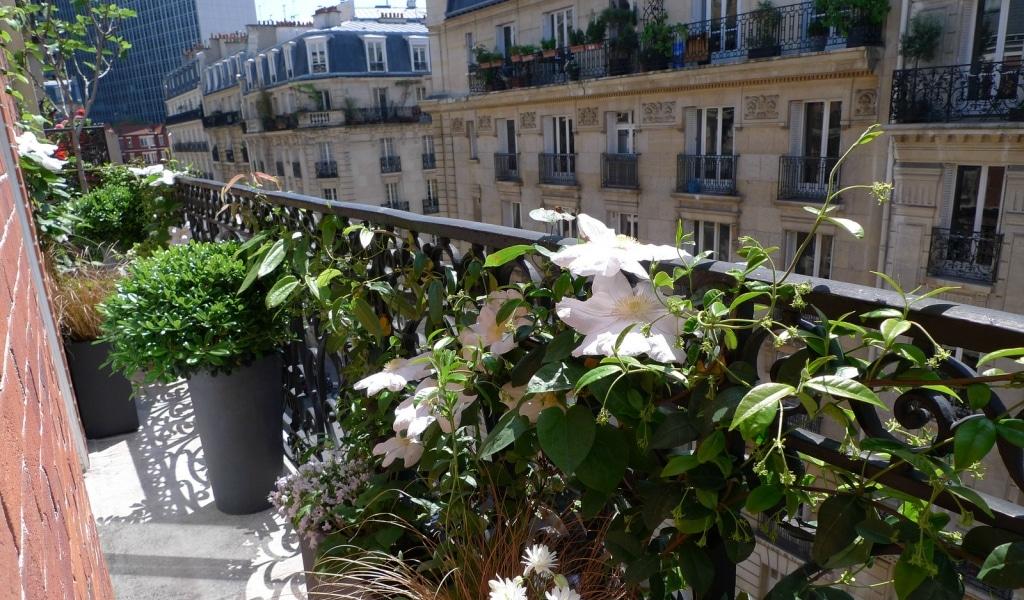 50 000 graines distribuées gratuitement pour végétaliser Paris